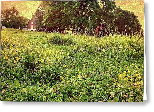 Peaceful Pastoral Perspective Greeting Card