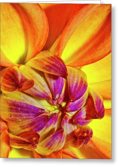 Peach Purple Flower Greeting Card