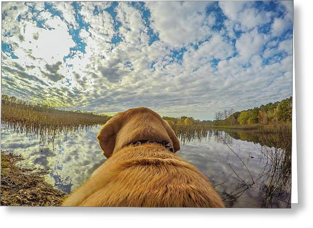Greeting Card featuring the photograph Pee Dee Reflections by Matthew Irvin