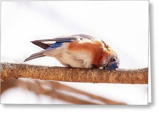 Peek-a-boo Blue Bird Greeting Card
