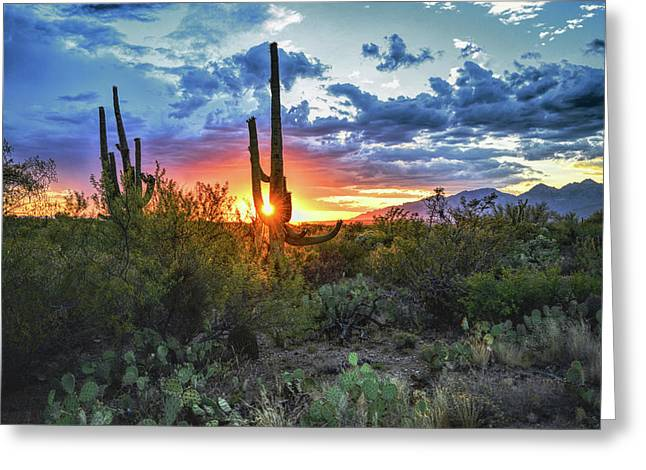 Tucson, Arizona Sagurao Sunset Greeting Card