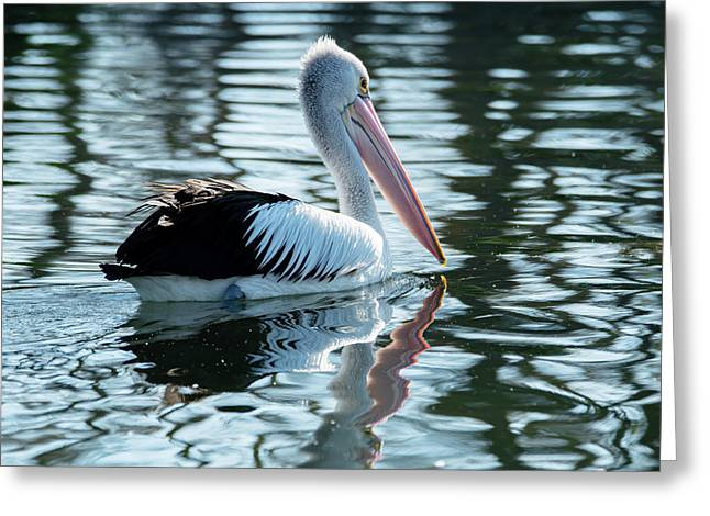 Pelican On The Lake Greeting Card
