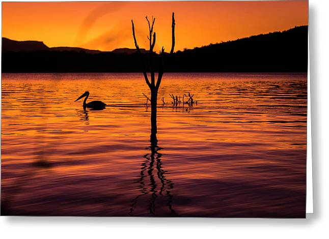Greeting Card featuring the photograph Pelican by Rob D Imagery