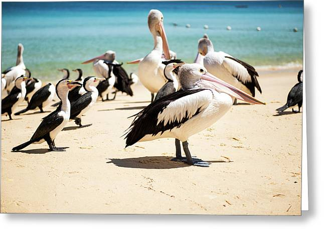 Greeting Card featuring the photograph Pelicans During The Day by Rob D Imagery