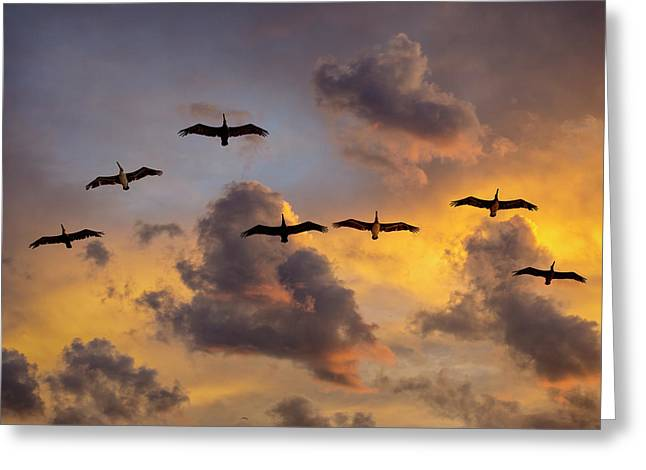 Greeting Card featuring the photograph Pelicans In The Clouds by John Rodrigues