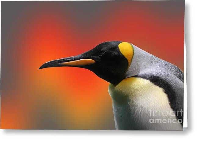 Penguin With A Modified Background Greeting Card