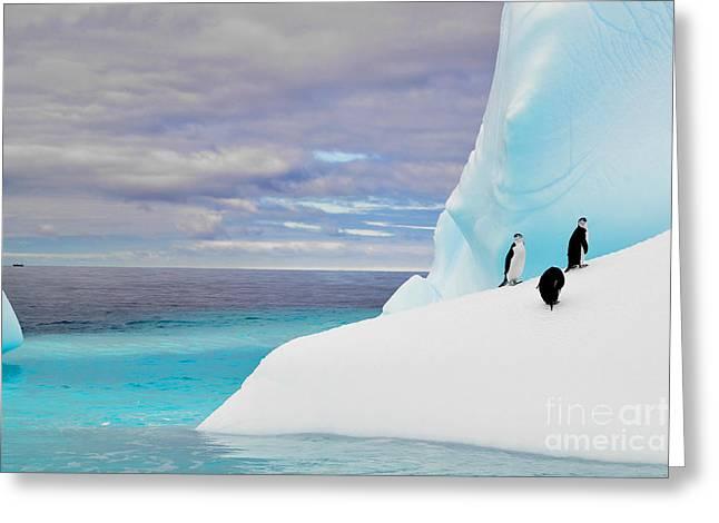 Penguins In Iceberg In Antarctica Pole Greeting Card