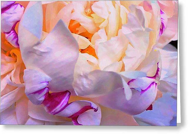 Peony Dreams  Greeting Card