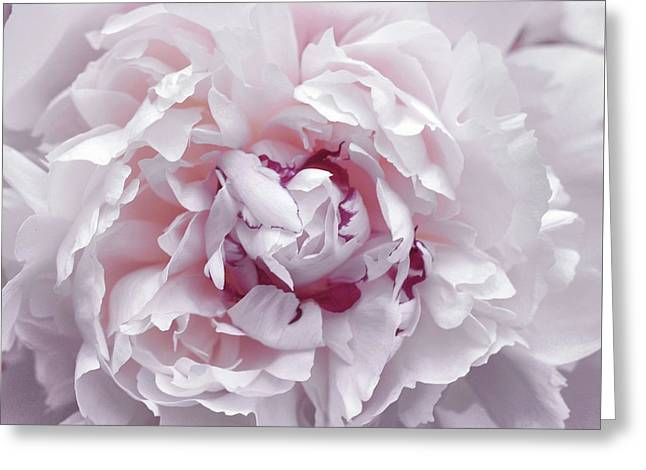 Greeting Card featuring the photograph Peony Pom Poms by JAMART Photography