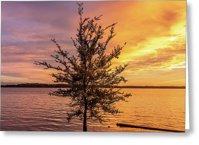 Percy Priest Lake Sunset Young Tree Greeting Card