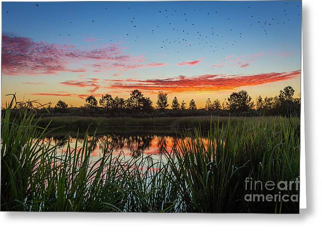 Phinizy Swamp Sunrise - Augusta Ga Greeting Card