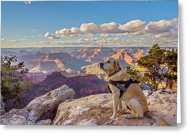 Greeting Card featuring the photograph Photo Dog Jackson At The Grand Canyon by Matthew Irvin