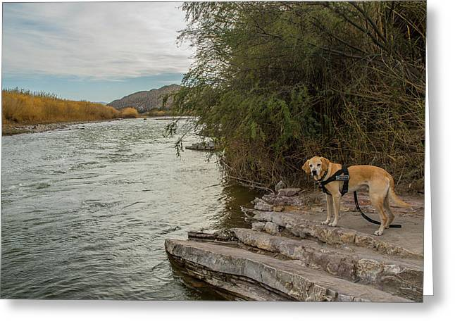 Greeting Card featuring the photograph Photo Dog Jackson At The Rio Grande by Matthew Irvin