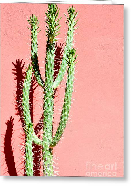Photo Picture Of A Tropical Cactus Greeting Card