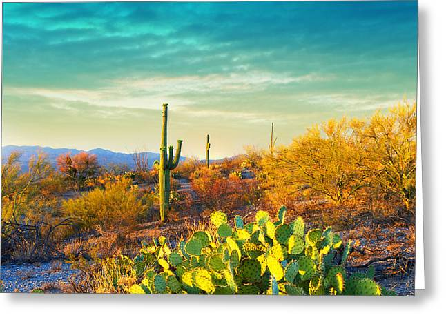 Picturesque, Serene Sunset In Saguaro Greeting Card