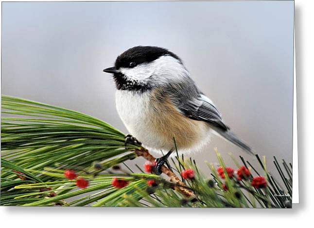 Greeting Card featuring the mixed media Pine Chickadee by Christina Rollo