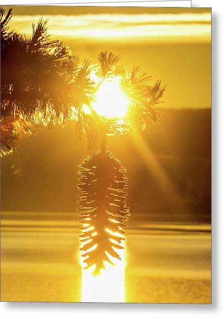 Pine Cone Fire Greeting Card