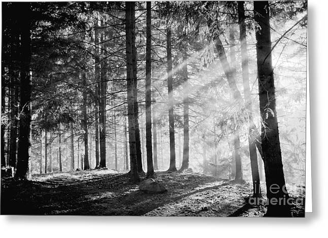 Pine Tree With Lights And Fog,black And Greeting Card