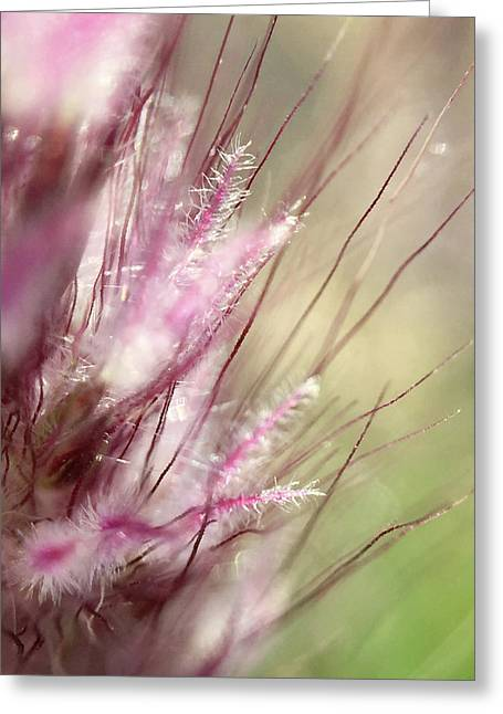 Pink Cotton Candy Greeting Card