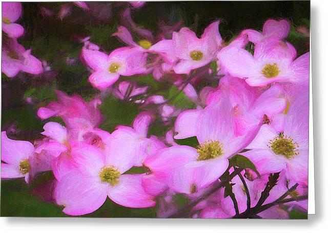 Pink Dogwood Flowers  Greeting Card