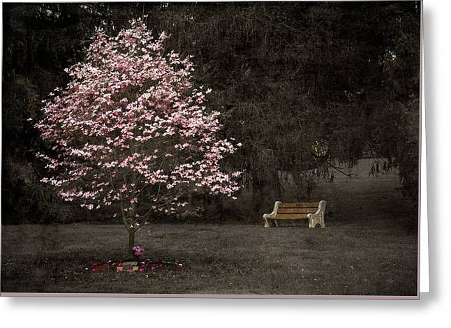 Pink Dogwood Tree And A Bench Greeting Card