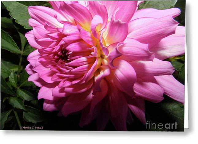 Pink Flower No. 58 Greeting Card