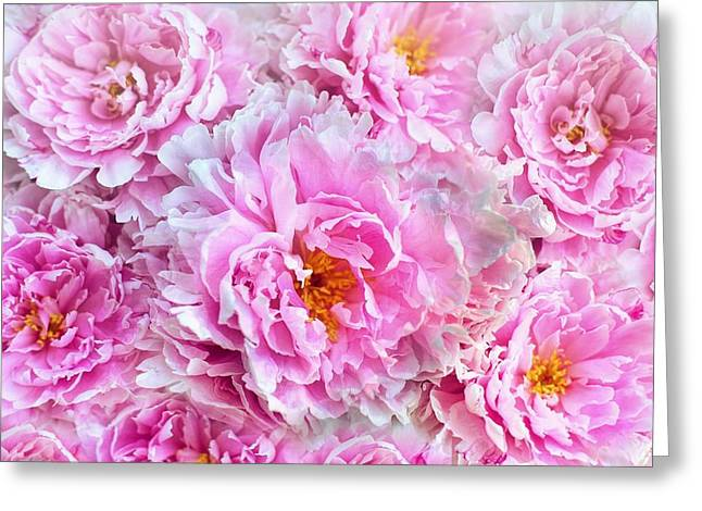 Pink Flowers Everywhere Greeting Card