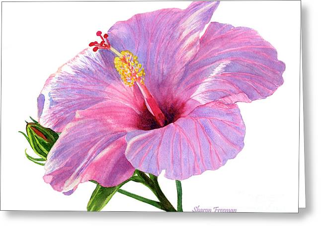 Pink Hibiscus Blossom With Blue Shadows Greeting Card