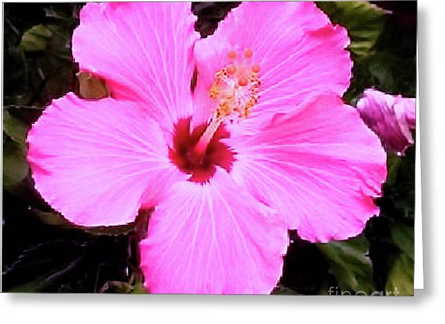Greeting Card featuring the photograph Pink Hibiscus by James Fannin