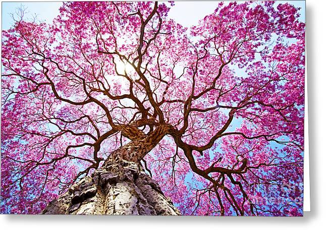 Pink Lapacho Tree At Sun´s Back Light Greeting Card