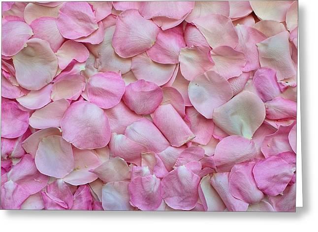 Pink Rose Petals Greeting Card