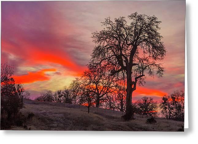 Pink Sunrise Greeting Card