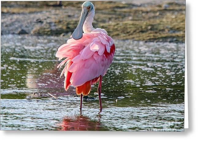 Pink Tutu Greeting Card