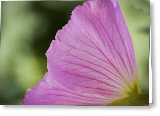 Pink Vains Greeting Card