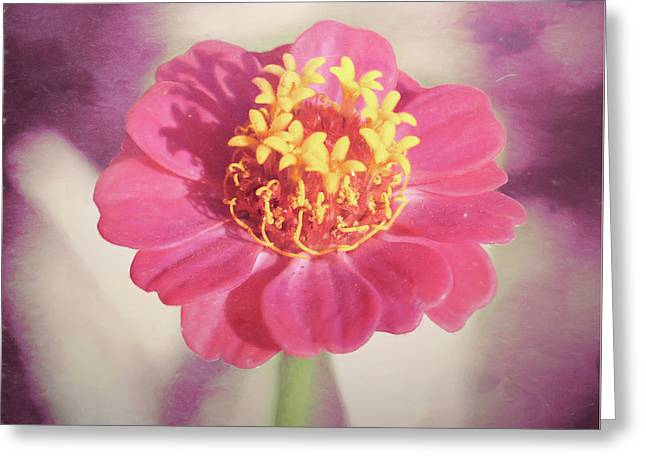 Pink Zinnia Isolated Greeting Card