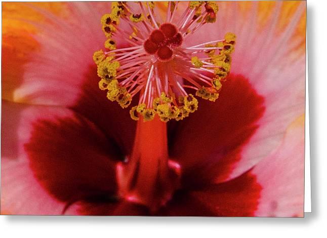 Pistol Packin' Flower Greeting Card