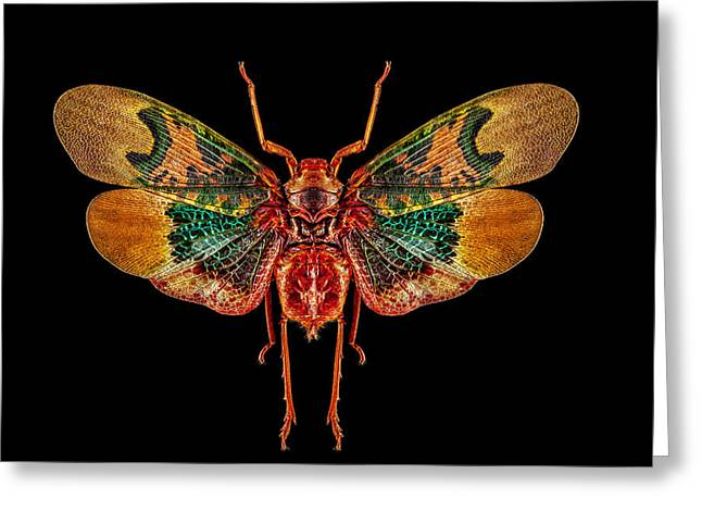 Planthopper Lanternfly Greeting Card