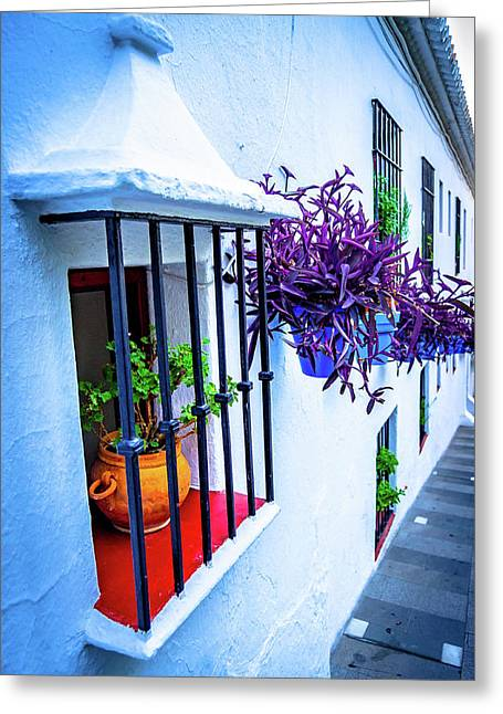 Plants On A Facade Greeting Card