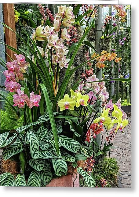 Plentiful Orchids Greeting Card