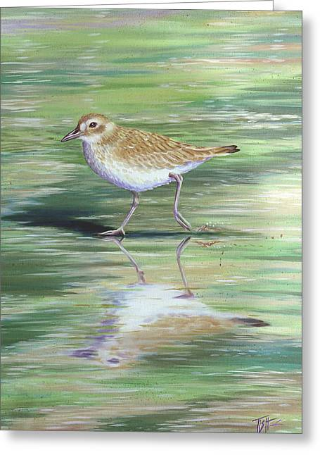 Plover Reflections Greeting Card
