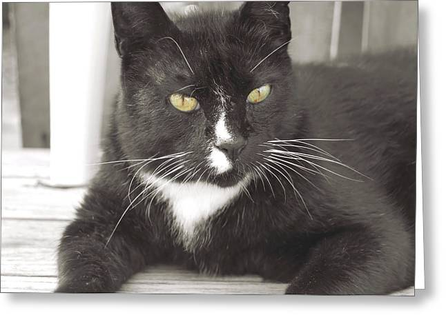 Poes Black Cat Greeting Card by JAMART Photography