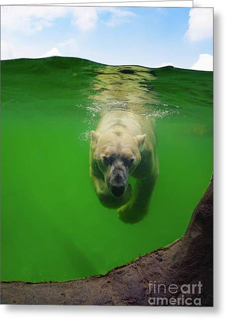 Polar Bear Underwater Greeting Card