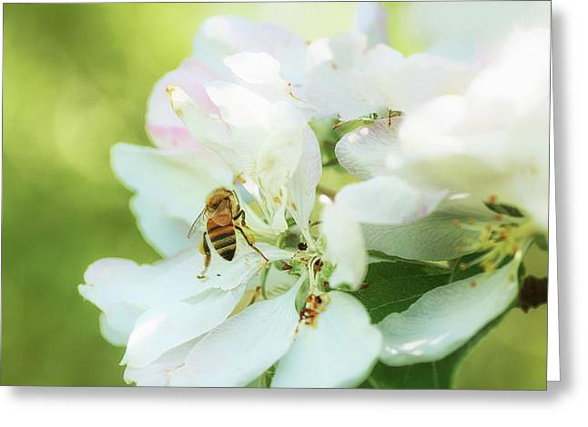 Pollen Gathering Greeting Card