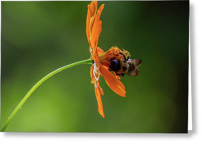 Greeting Card featuring the photograph Pollinating The Cosmos by Dale Kincaid