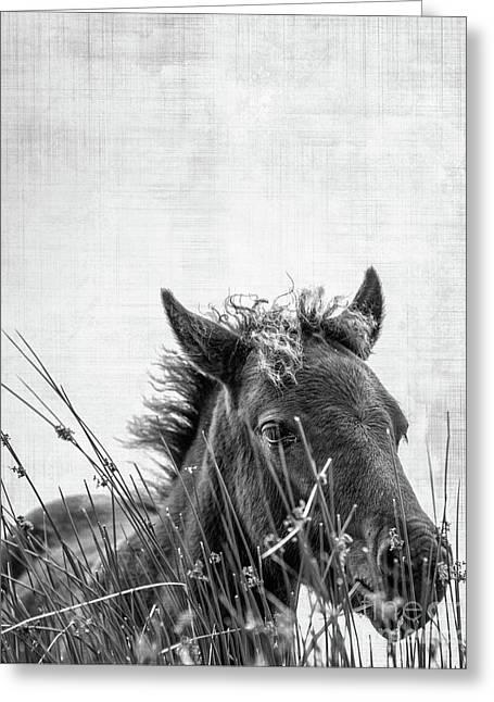 Pony Foal Greeting Card