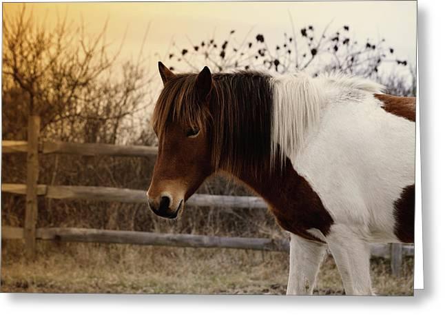 Pony Warm Up Greeting Card