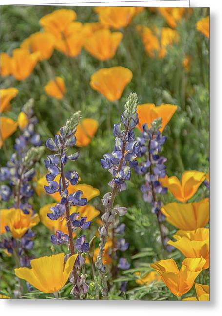 Poppies And Mountain Lupine 5585-030519 Greeting Card
