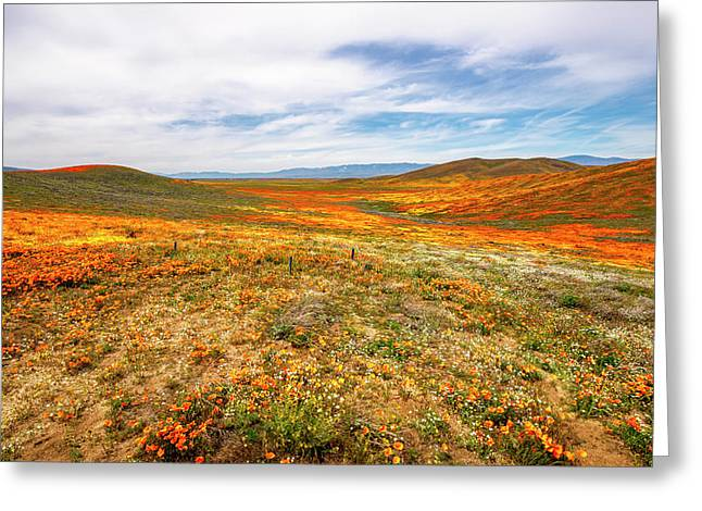Poppies As Far As The Eye Can See Greeting Card