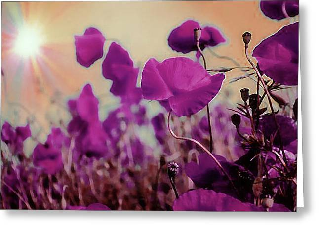 Poppies In Sunlight Greeting Card