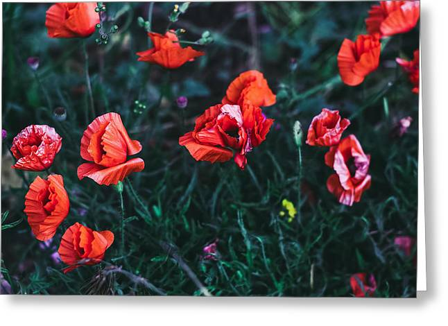 Poppies In The Field. Minimal Style Greeting Card